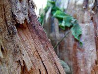 Quadri in legno su ordinazione